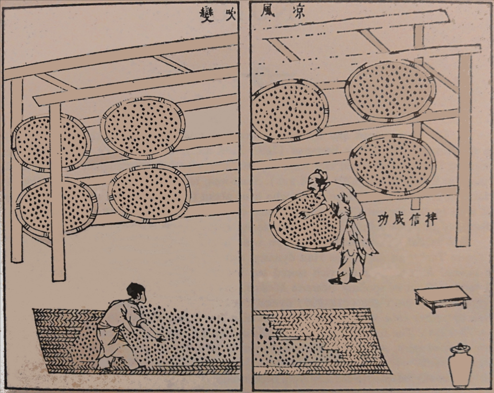 Ferment-steamed-rice-with-Monascus-fungi-on-bamboo-trays-1637